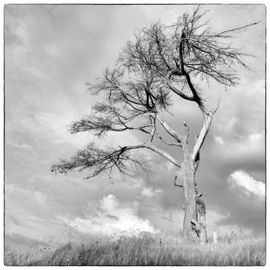 Kunstt kaart boom zwart-wit, rouwkaart, verlies, bemoediging Atelier for Hope Doetinchem