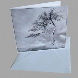 Kunstkaart Rouwkaart Boom zwart wit Atelier for Hope Doetinchem