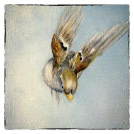 Kunstkaart Musje vliegend Atelier for Hope Doetinchem Mussenkaarten