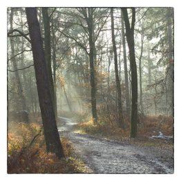 rouwkaart Bospad, licht door de bomen fotokaart