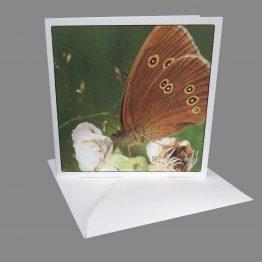 foto kaart vlinder koevinkje Atelier for Hope Wenskaarten Kunstkaarten