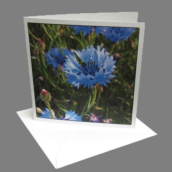 kaart korenbloem Atelier for Hope Wenskaarten van foto's